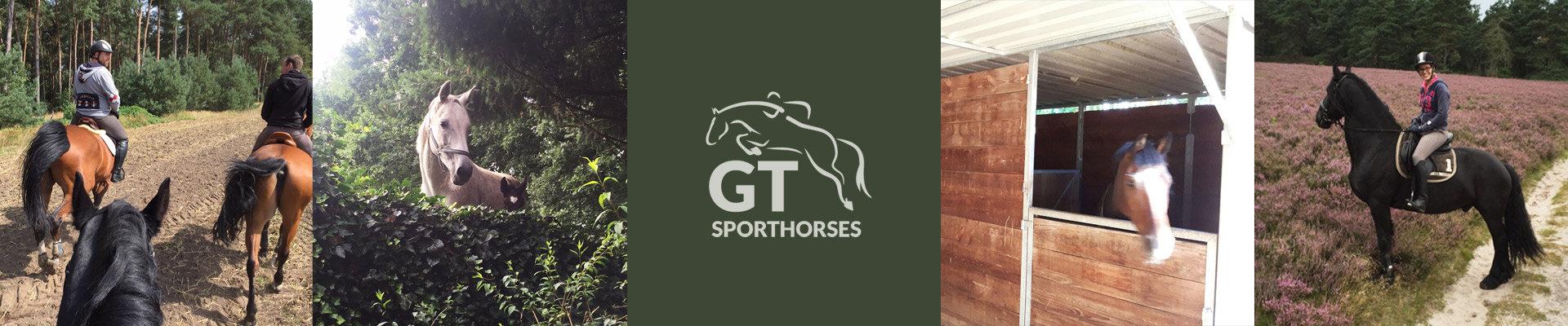 gt-sporthorses-2.jpg