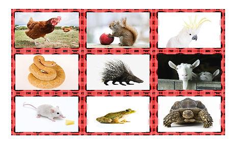 Animals Spanish Legal Size Photo Card Ga