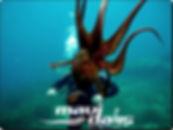 izmir-tüplü-dalış-eğitimi-ahtapot