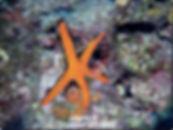 izmir-dalış-kursları