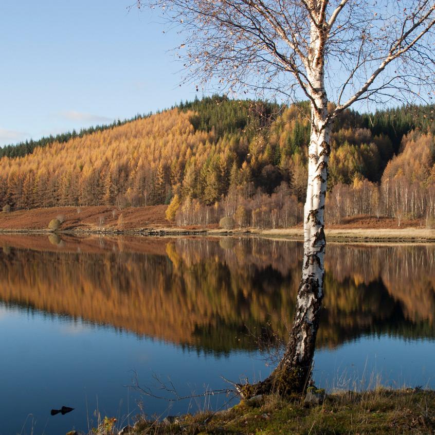 Loch Gary Gold