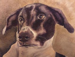Check out Jim Finlay's animal portraits