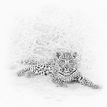 AFR - leopard HK 20160101.jpg