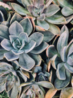 agave-close-up-color-1207978.jpg