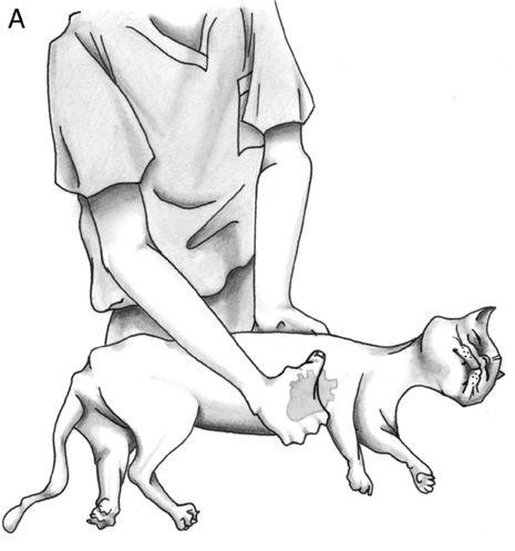 реанимация меких пород собак