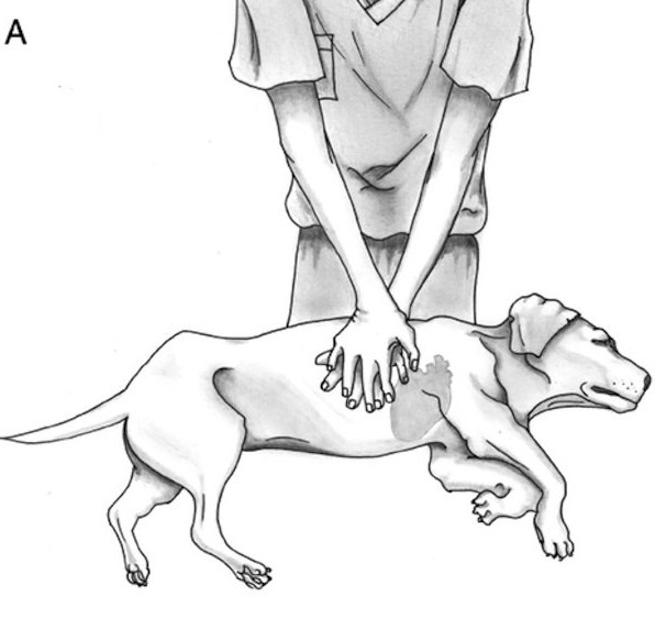 реанимация собак заставка
