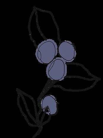 LEKKA_KAEK_Illustration_Blaubeere_01-sma