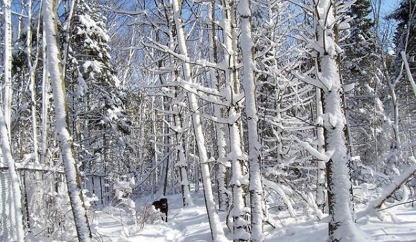 Зимние обновления onlinepbx