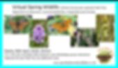 virtual spring wildlife facebook event.p
