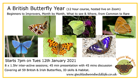 butterfly year facebook event 1.png