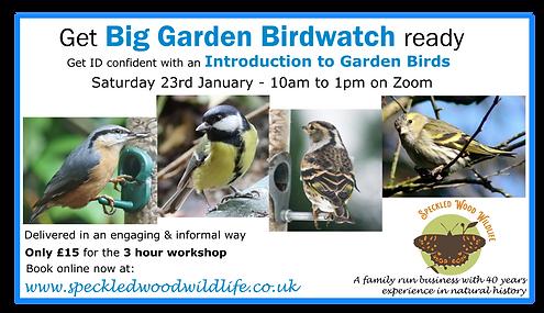 big garden birdwatch workshop.png