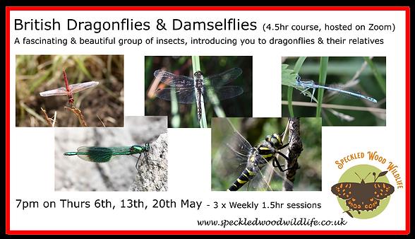 Dragonfliespng.png