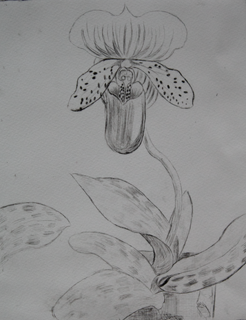 Intaglio of an Orchid