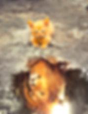 Katzen-01_Tiggers_Vorn_27-12-2019_640.jp