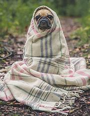 Das Hunde Notizbuch 'Monty' als schöne Geschenkidee