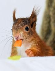 Das Eichhörnchen Notizbuch 'Mia' als schöne Geschenkidee