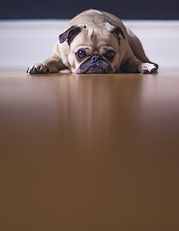 Das Hunde Notizbuch 'Ren' als schöne Geschenkidee