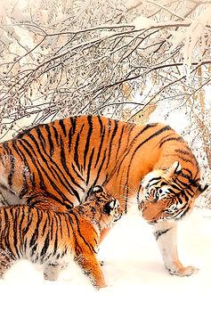 Fantasy Notizbuch Tiger Schnee Raubtier