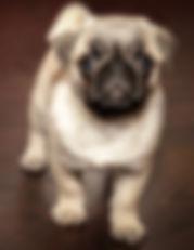 Das Hunde Notizbuch 'Mira' als schöne Geschenkidee
