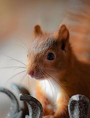 Das Eichhörnchen Notizbuch 'Max' als schöne Geschenkidee