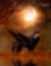 Das Fantasy Notizbuch 'Schattenwolf' als schöne Geschenkidee