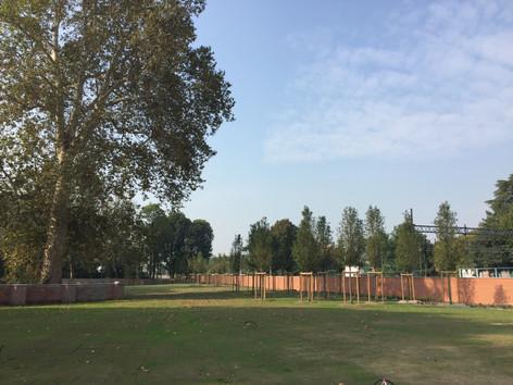 Parco verde con alberi