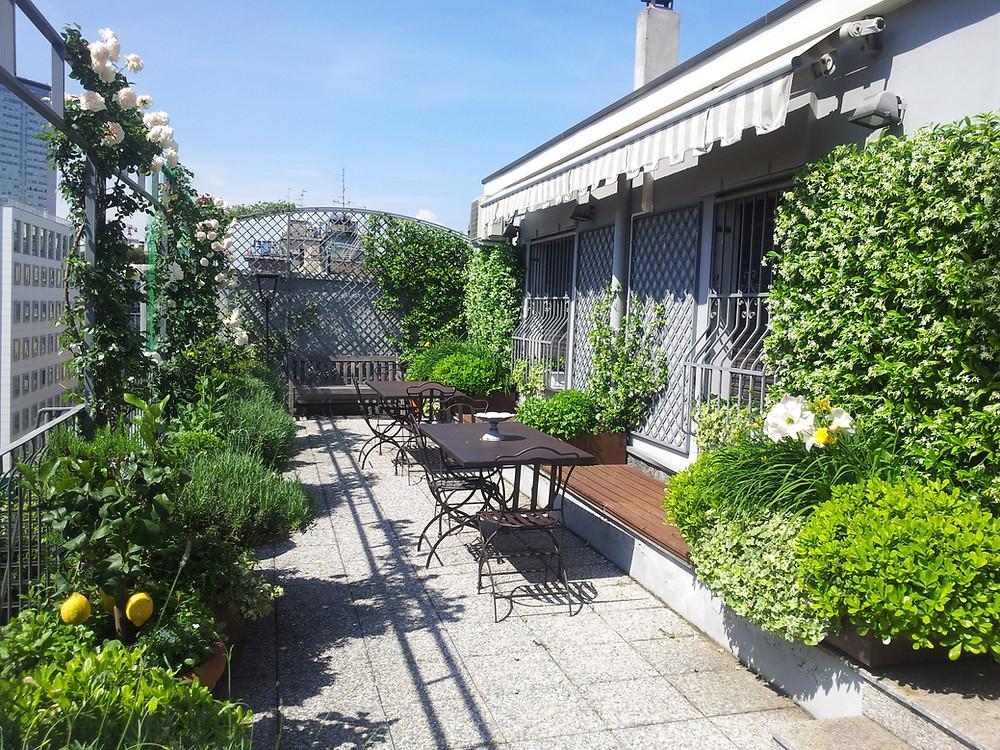 Rooftop con limoni, rose, gelsomini, lavanda ed erbe aromatiche: oasi verde a Milano