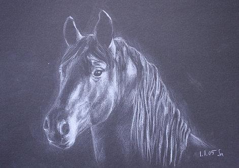 Kunst, Pferdezeichnung, St. Gallen, Pferd, Farbstift