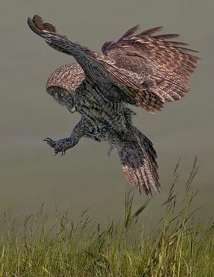 Jacquie Matechuk_ Ornithology-4.jpg