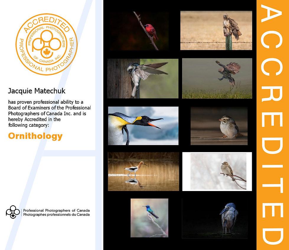 PPOC-Accredited Ornithology.jpg