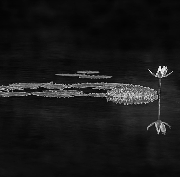 Lily In The Darkness