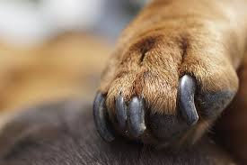 dogs nails2.jpg