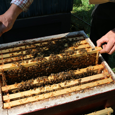 Checking the hive.
