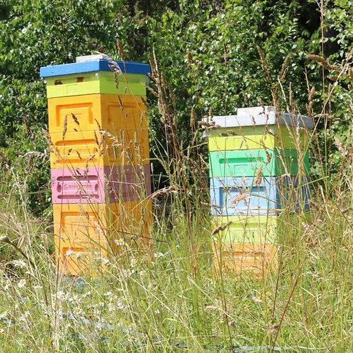 Hive Share Ekvik