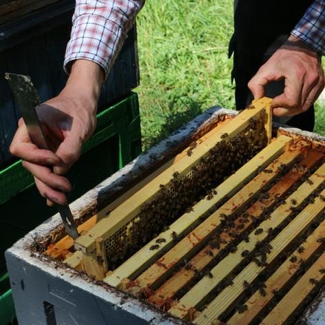 Checking a hive.