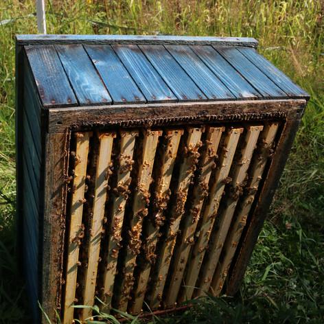Box of honey.