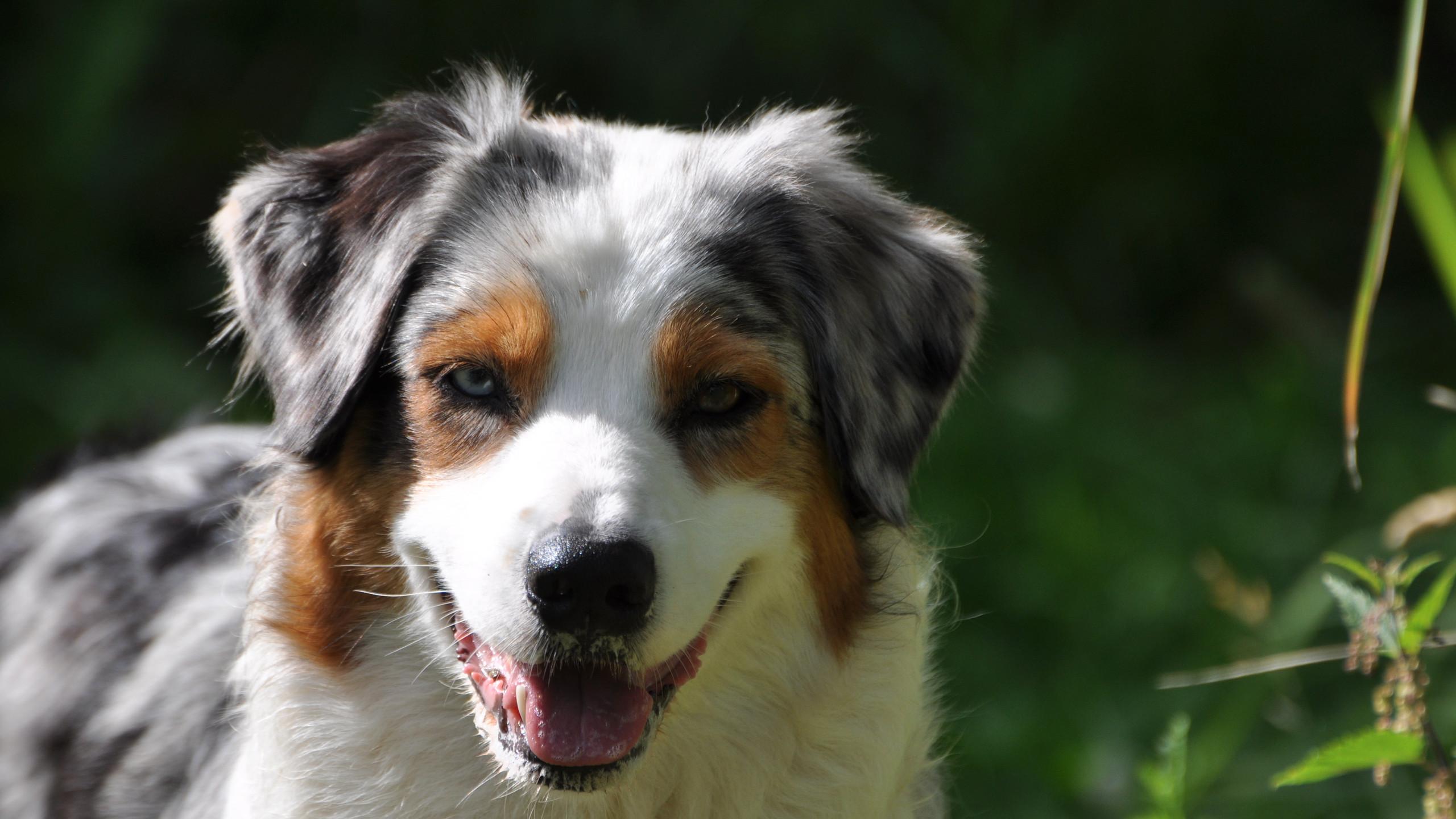 Bilder Hunde August 2012 098