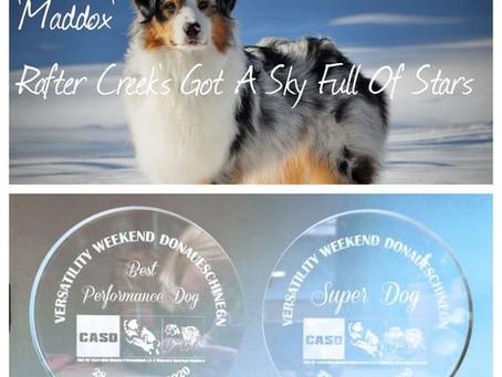 Maddox wird mit Gerli in Donaueschingen Superdog 2020 und Best Performance Dog