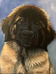 Mack, Leonberger pup