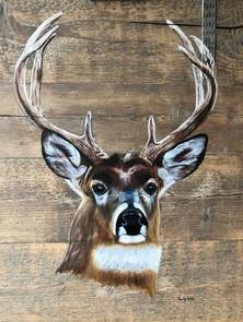 Hert, deer