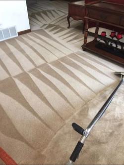 carpet cleaner colorado springs