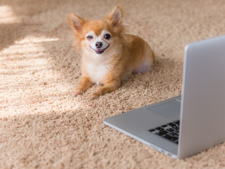 Common Carpet Cleaning Mistakes Pet Owners Make