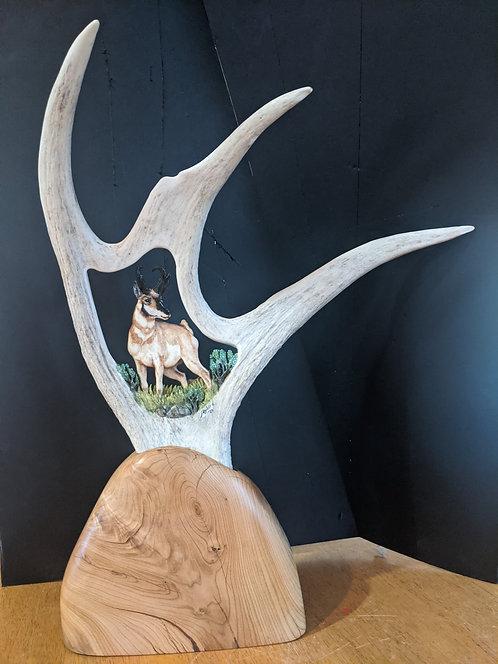Moose Antler Pronghorn Antelope