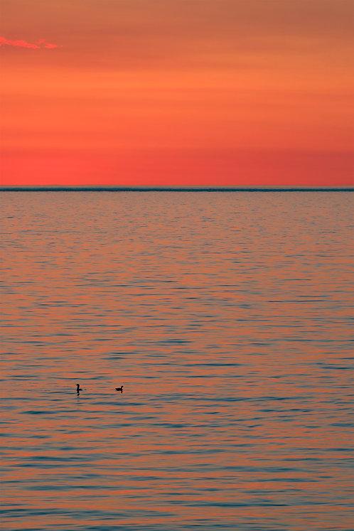 Sunrise Ducks