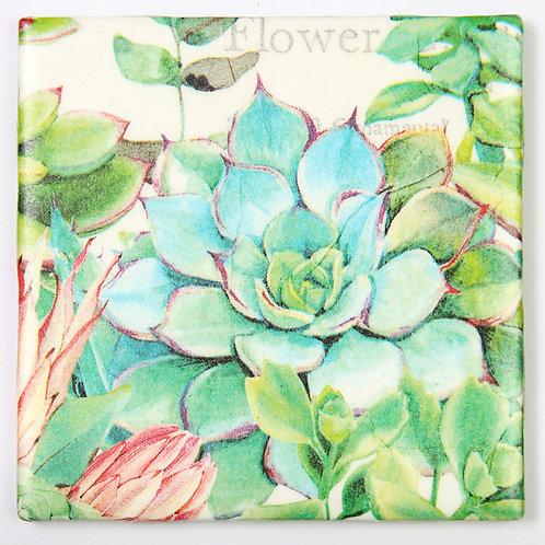 Succulents:  Set of 4