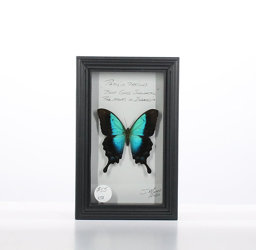 Blue Glass Swallowtail