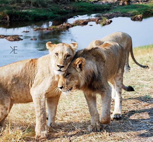 Lion Mates