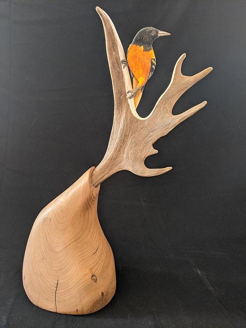 Fallow Deer Balimore Oriel