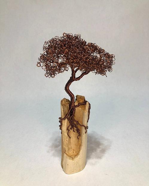 Bronze Bonsai on Driftwood