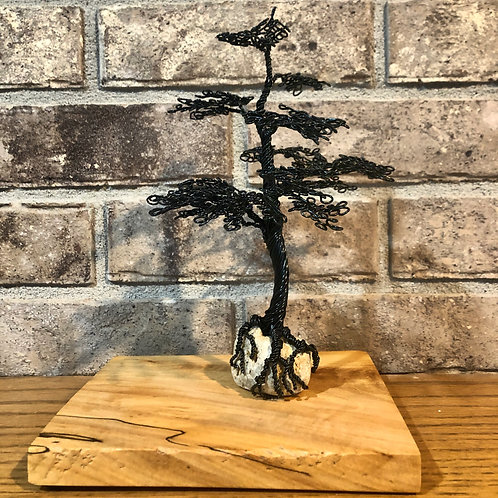 Black Bonsai on Spalted Maple